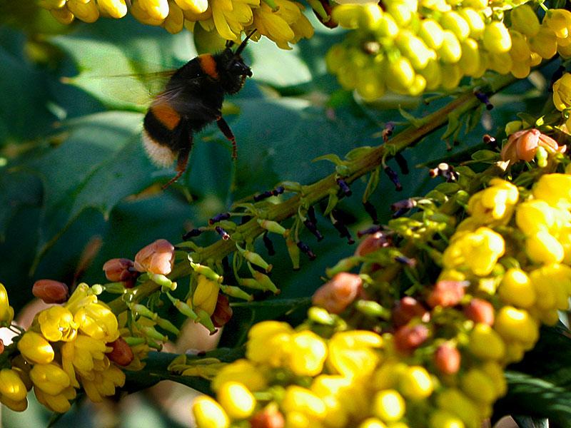 bombo, api e co. a natale in Toscana