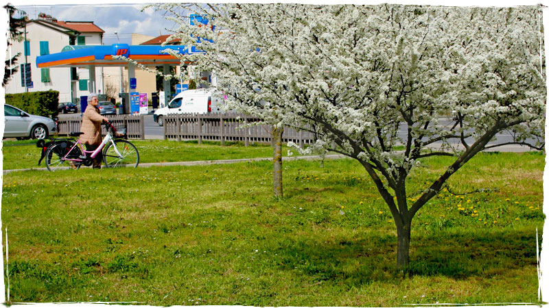 Primavera a Figline, giardino Generale della Chiesa