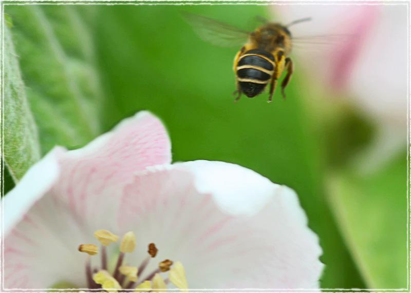 ape Maya torna a casa