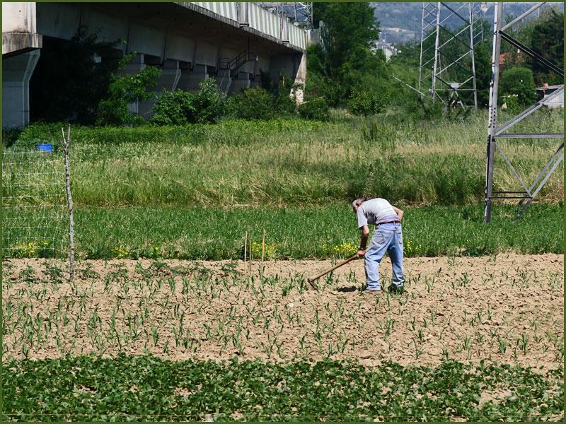 Agricoltura urbana a Matassino nei pressi di Figline Valdarno